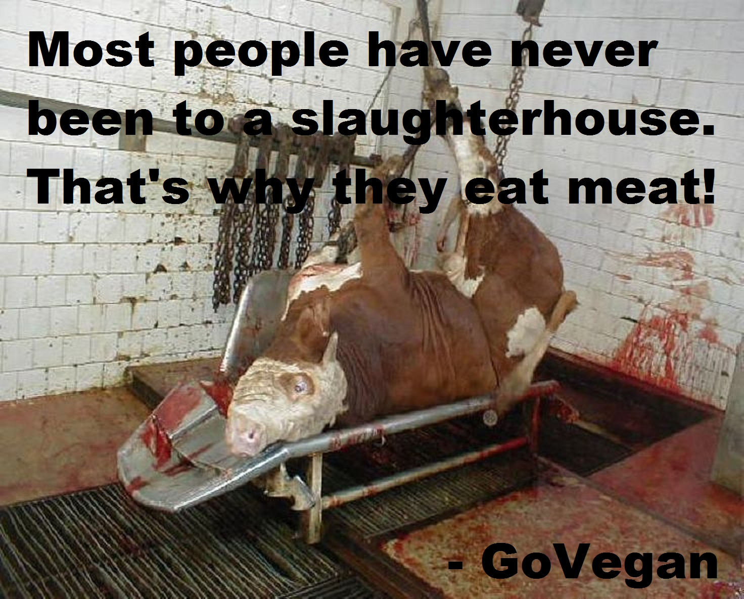 Most people have never been to a slaughterhouse. That's why they eat meat.