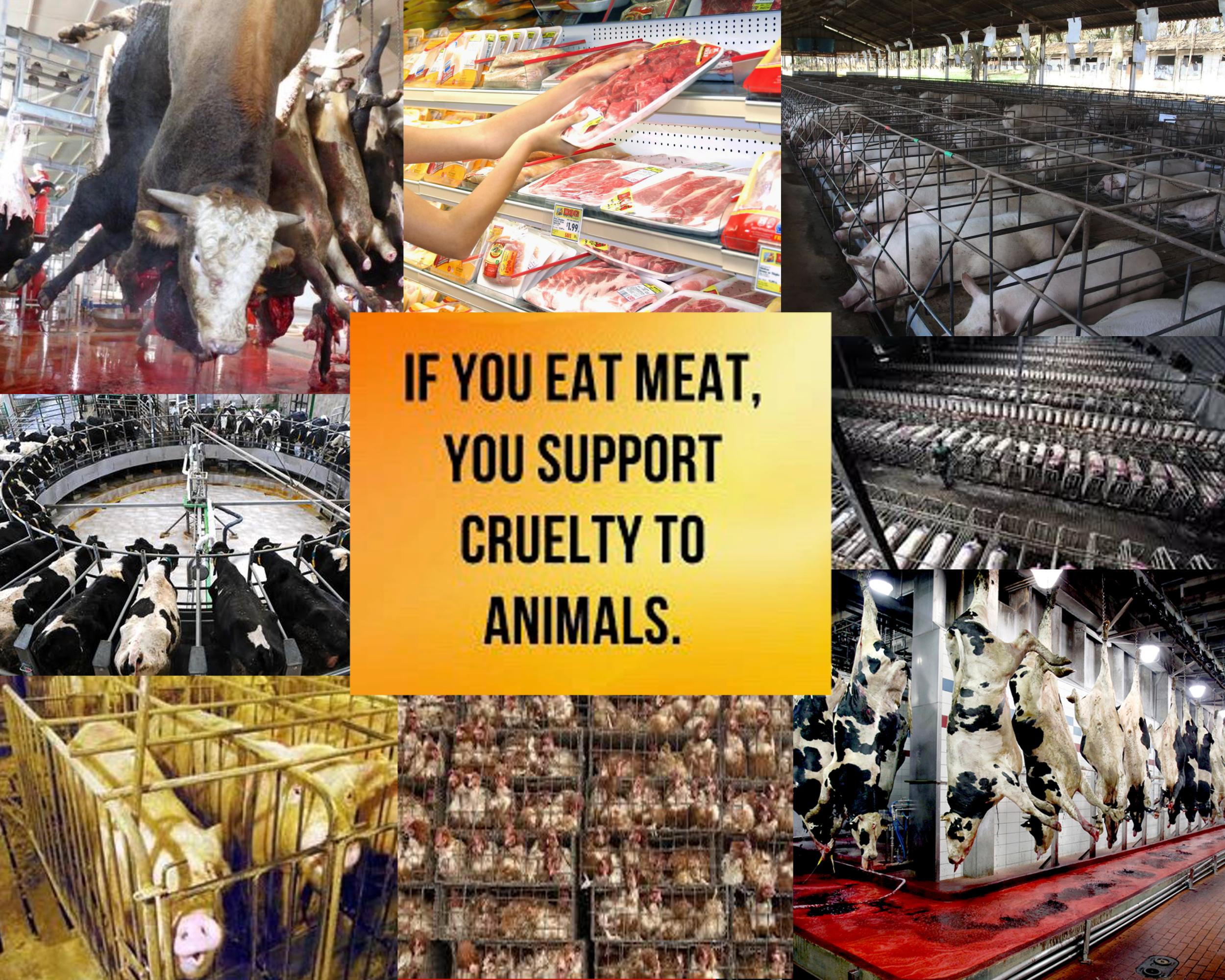 Cruelty_to_animals