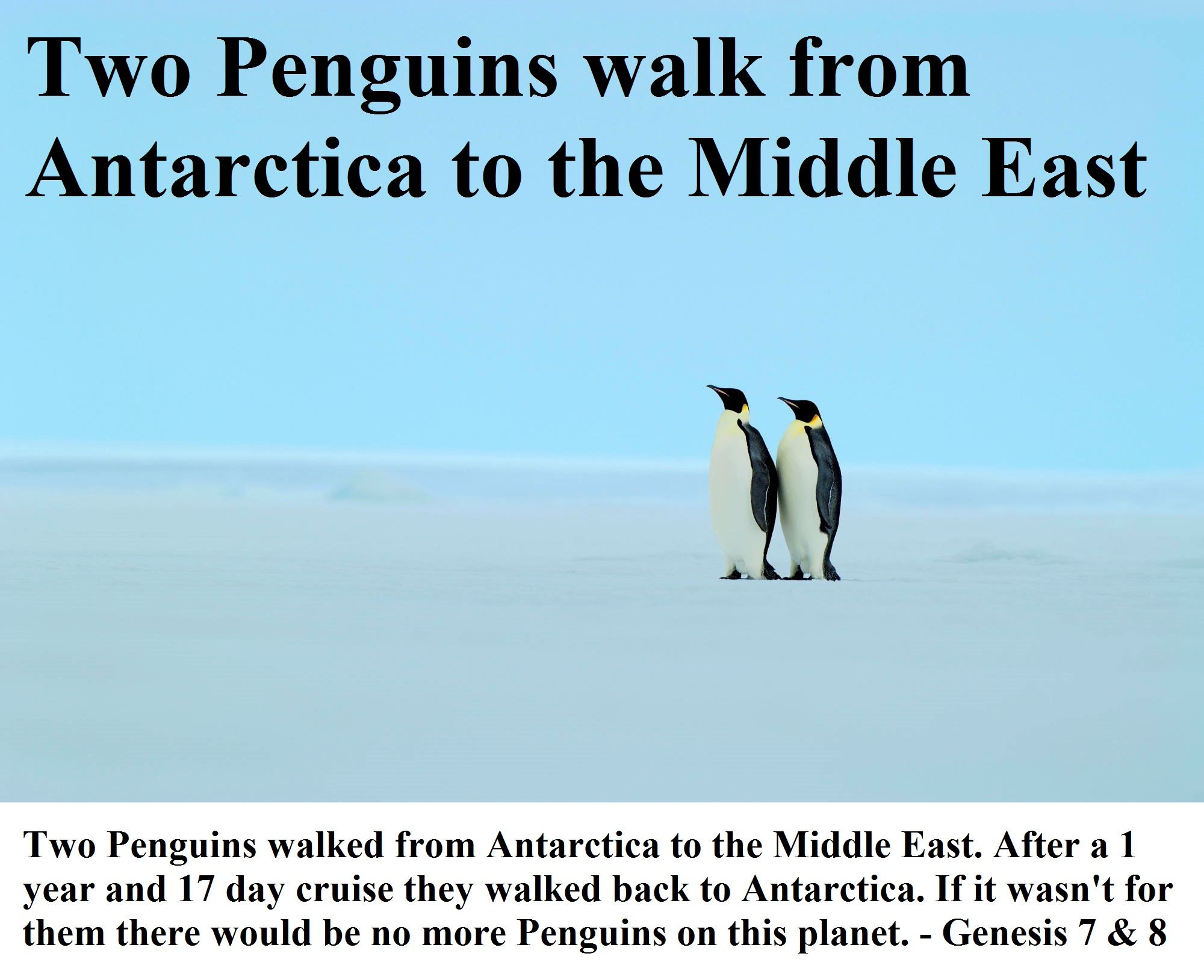 Two Penguins walked from Antarctica to the Middle East. After their 1 year and 17 day cruise they walked back to Antarctica. If it wasn't for them there would be no more Penguins on this planet. - Genesis 7 & 8