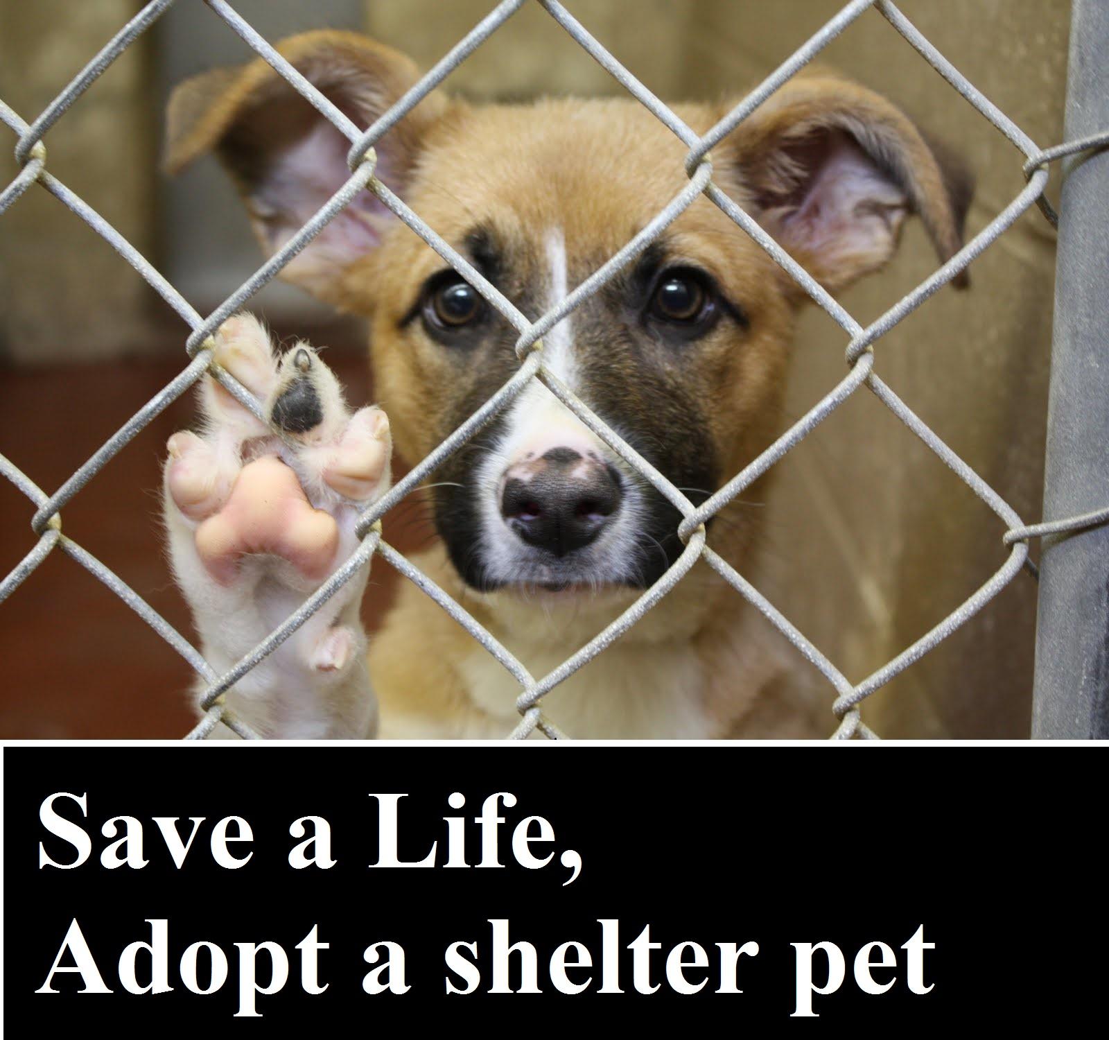 Save a Life, Adopt a shelter pet