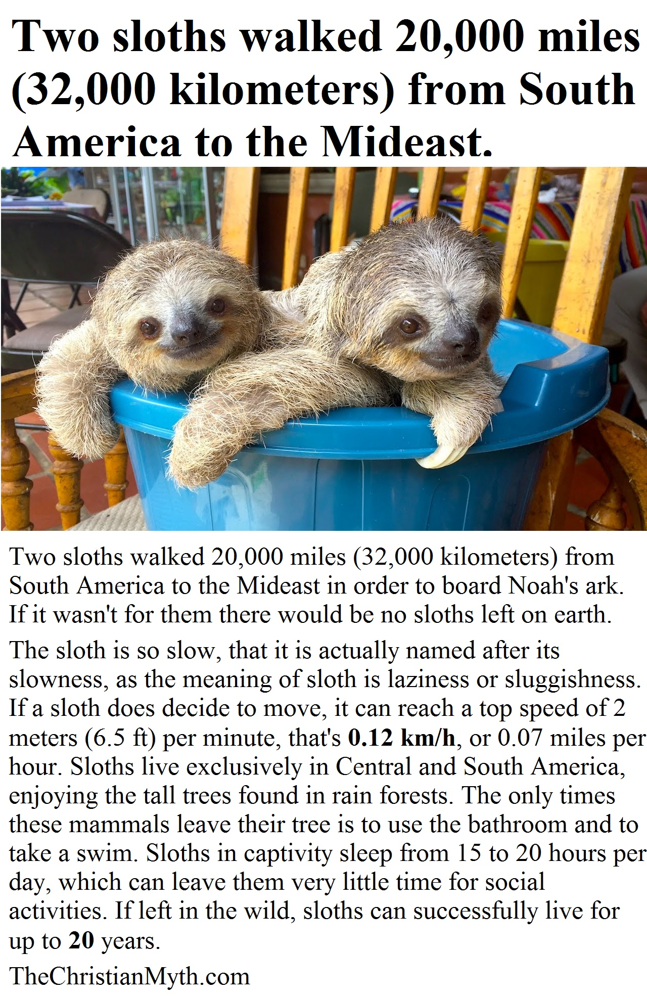 Two sloths walked 20,000 miles (32,000 kilometers) from South America to the Mideast.