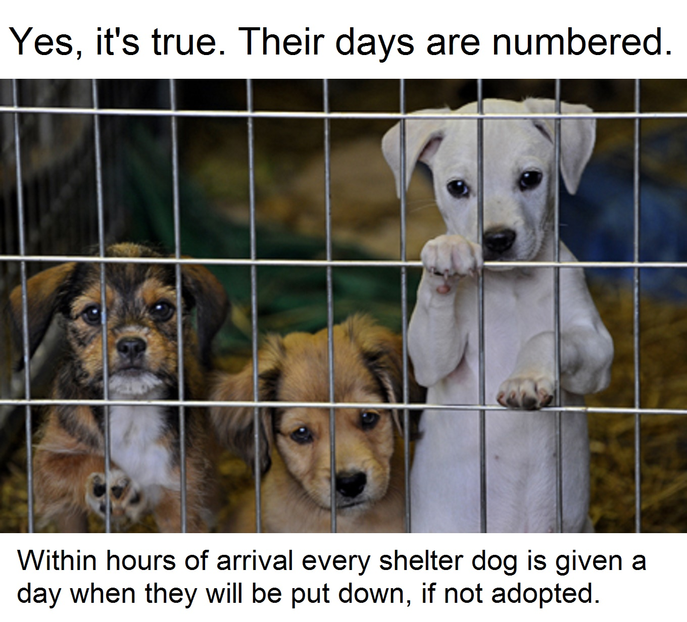 Shelter will have to put down animals if not adopted soon