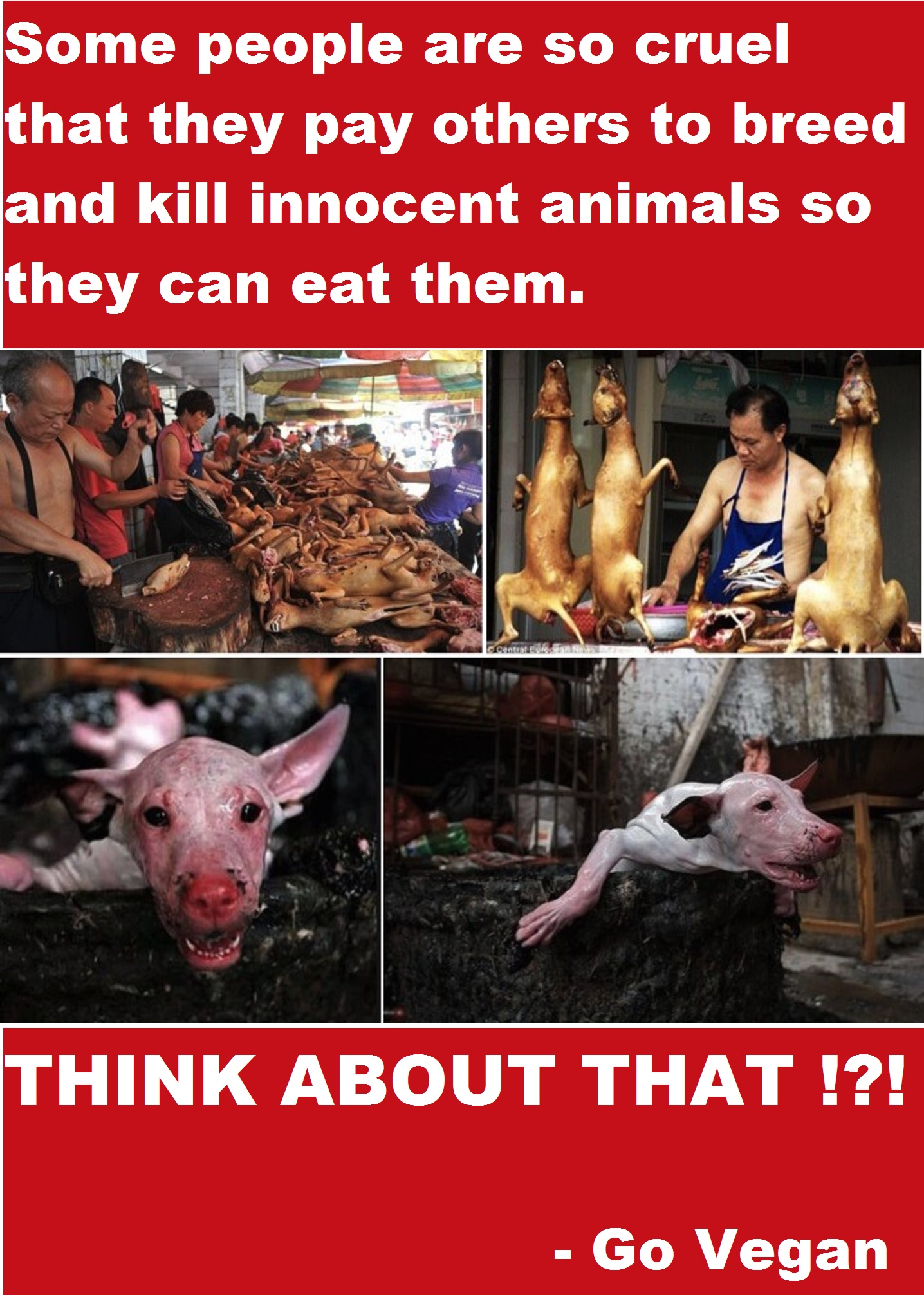 Some people are so cruel that they pay others to breed and kill innocent animals so they can eat them. THINK ABOUT THAT !?! - Go Vegan