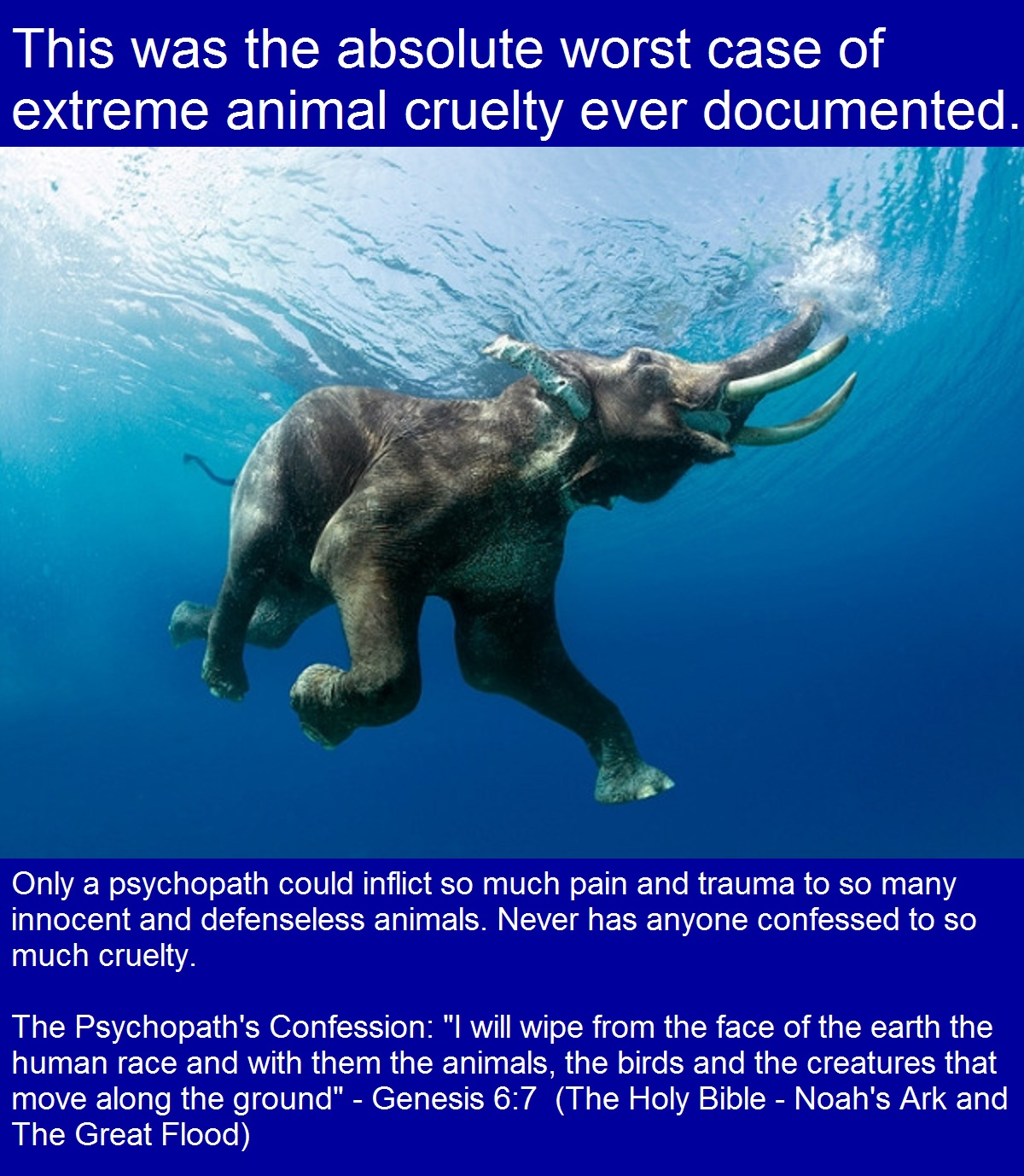 This was the absolute worst case of extreme animal cruelty ever documented.