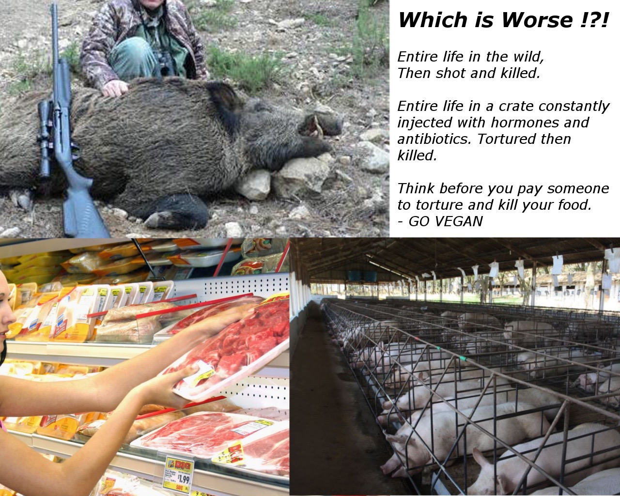 Which is Worse !?! Entire life in the wild, Then shot and killed. Entire life in a crate constantly injected with hormones and antibiotics. Tortured then killed. Think before you pay someone to torture and kill your food. - GO VEGAN